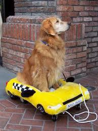 Taxi Animalier 94